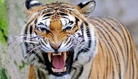 1986年生肖属虎的人一生运势