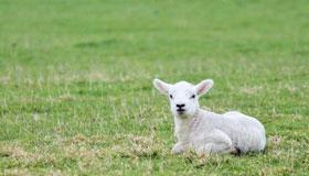 生肖羊在2022年的全年运势