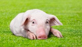 1959年出生的62岁属猪人在2021年的运势