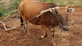 1961年出生的60岁属牛人在2021年的运势