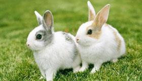 1963年出生的58岁属兔人在2021年的运程