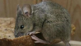 冬天出生的属鼠人命运分析