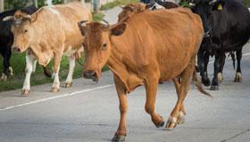 1973年出生的48岁属牛人2021年命运