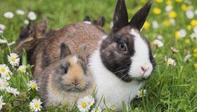 1987年出生的34岁属兔人2021年的运程