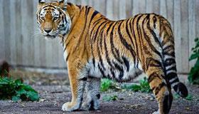 1974年出生的47岁属虎人2021年运程