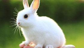 春天出生的属兔人命运分析