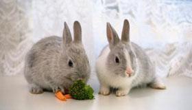 属兔人的婚姻与命运分析