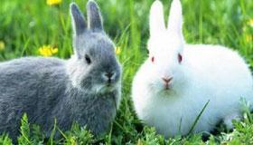 1987年出生的属兔人的命运与婚姻