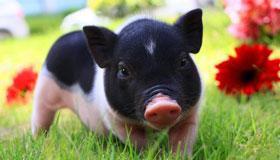 1959年出生的属猪男人2020年命运