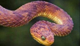 生辰八字算命之属蛇人的命运
