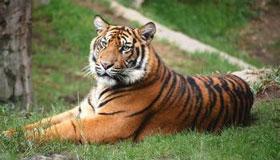 秋天出生的属虎人命运分析