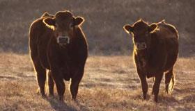1985年属牛人2020年每月运势