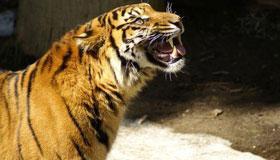 1986年出生的属虎人2020每月运势