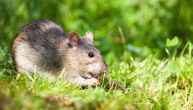 2020年属鼠人每月运势运程