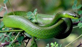 2001年出生的属蛇人2020年每月运势