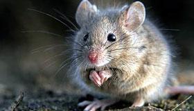 1984年属鼠人2020年每月运势
