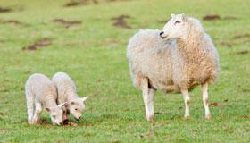 42岁生肖属羊的女性2021年运势