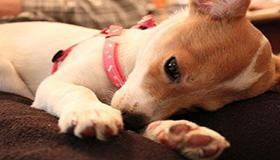 养宠物风水禁忌 养错地方可能致破财
