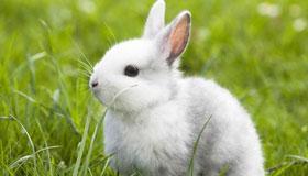 34岁生肖属兔的女性2021年运势