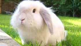 58岁生肖属兔的女性2021年运势