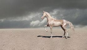 55岁生肖属马的女性2021年运势