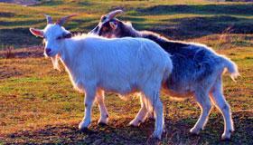 2003年出生的18岁属羊人2021年运势