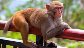2004年出生的17岁属猴人2021年运势