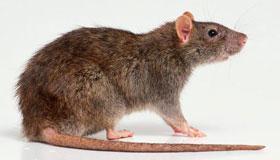 1960年出生的61岁属鼠人2021年运程
