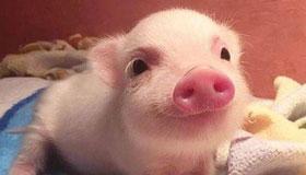 38岁生肖属猪的女性2021年运势