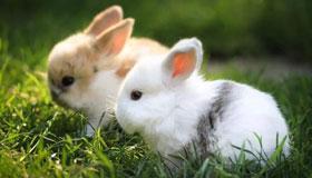1999年十一月出生的属兔婚姻命运