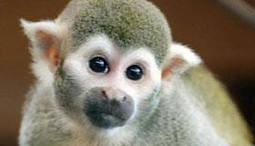 十二生肖之属猴人的婚姻命运