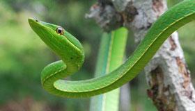 属蛇人的爱情软肋与恋爱原则