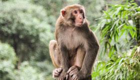 属猴人的爱情软肋与恋爱原则