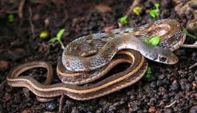 周公解梦中女人梦见蛇预示着什么