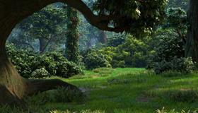 周公解梦梦见大森林是好梦吗