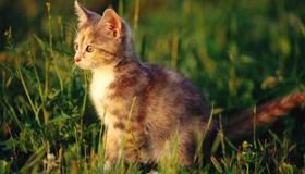 一个女人梦见猫是什么预兆