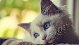 做梦梦到抱着很温顺的猫代表了什么预兆