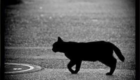 已婚女人梦见黑猫有什么预示吗