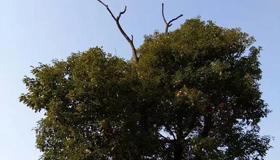 梦见树上挂着女尸有什么寓意呢