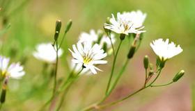 做梦梦见采摘野花有什么寓意呢