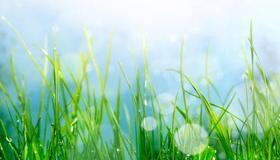 做梦梦见很多青草绿油油的代表了什么
