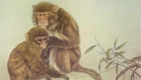 2021年属猴的财运方向在哪里呢