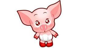 2021年属猪的财运运势方向哪里最好呢
