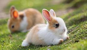 属兔人2021年财运方向在哪里