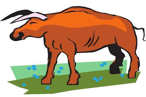 2021年辛丑牛年属牛人的全年运势
