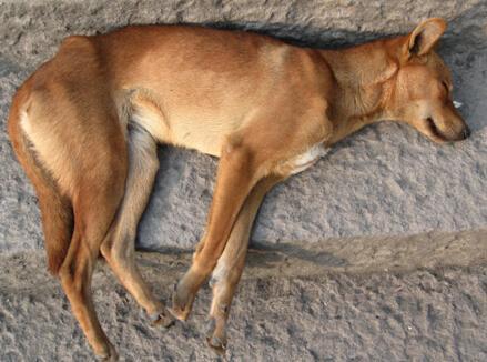 梦到把狗打死了是好事吗 有好兆头吗