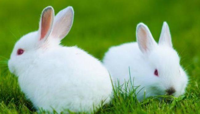 紫微斗数分析2021年属兔人的全年运势
