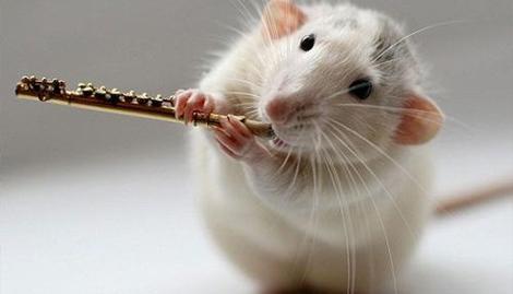 梦见自己生个老鼠是什么意思