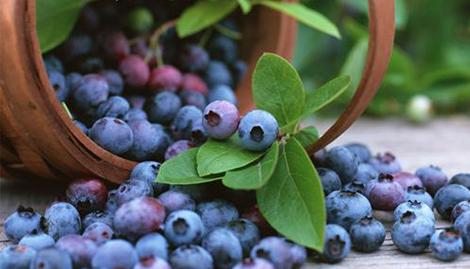 梦见蓝莓果是什么意思