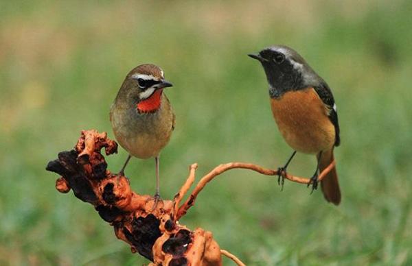 梦见漂亮的鸟什么征兆 预示什么